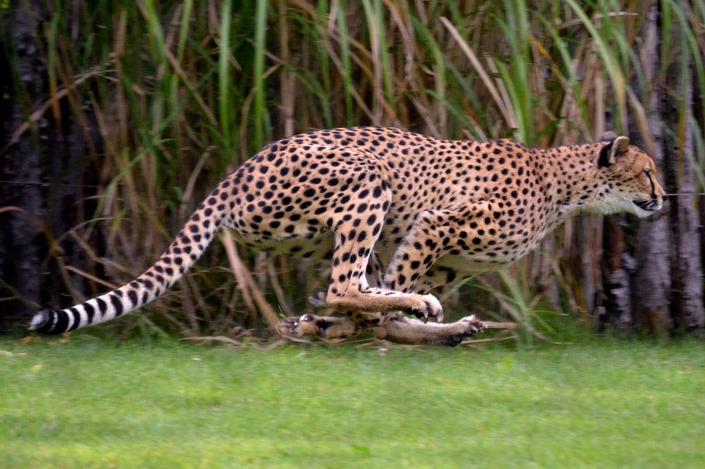 math worksheet about jaguars math best free printable worksheets. Black Bedroom Furniture Sets. Home Design Ideas